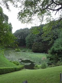 薬草園の蓮池